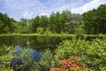 .jpg森林植物園