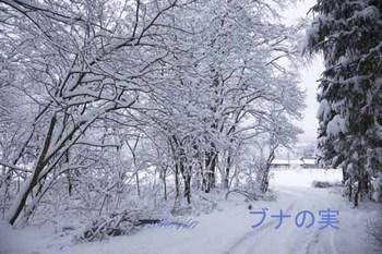 4月17日 大雪.jpg