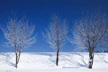樹氷 白馬.jpg